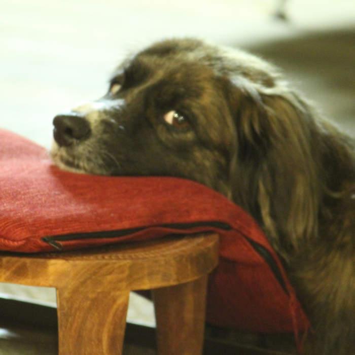 Dressage de chien à la Réunion avec Flair-Play canin.