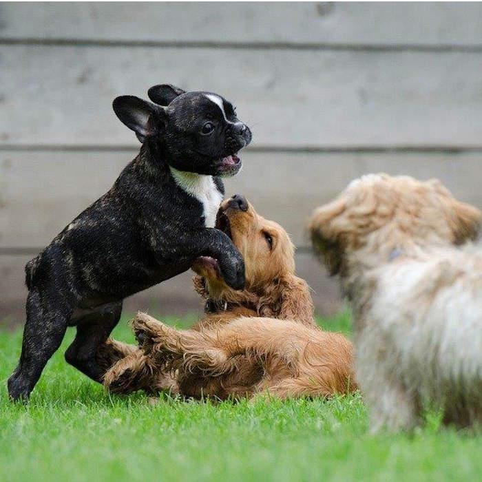 Comment dresser son chiot avec un éducateur canin cynologiste à la Réunion.
