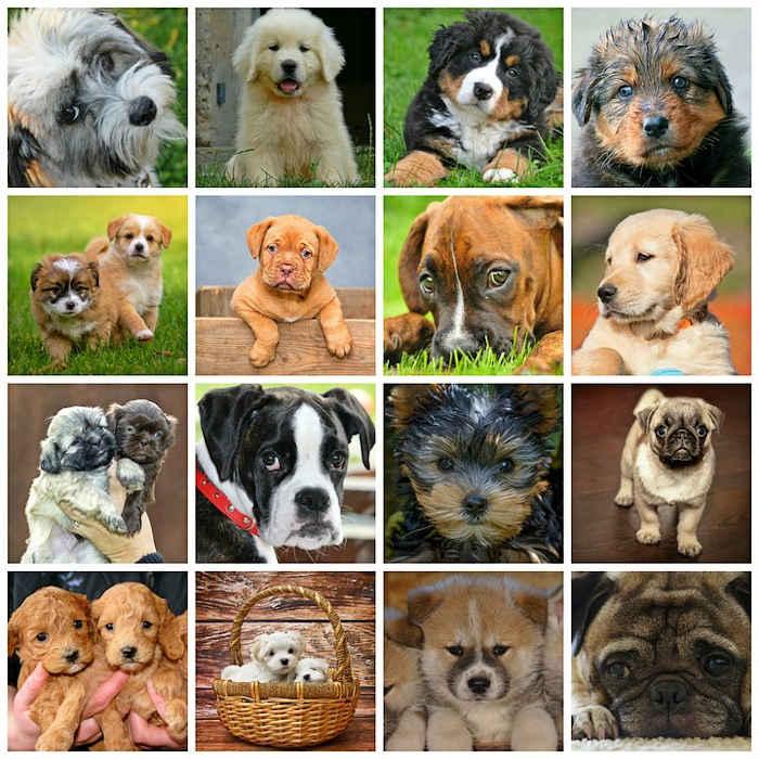 Quel chien choisir ? Un éducateur canin à la Réunion vous conseil dans le choix du chien pour des enfants. Quel chien choisir quand on a des enfants.